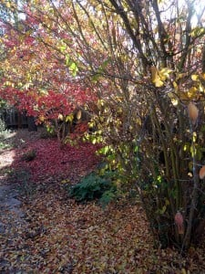crape myrtle carpet