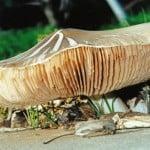 The Mighty Mushroom_pr