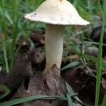 upright-mushroom