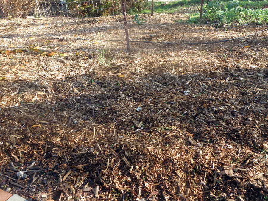 Wood Chips For Ground Cover ~ Wood chips as forest floor life in the garden