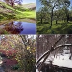 seasons banner color