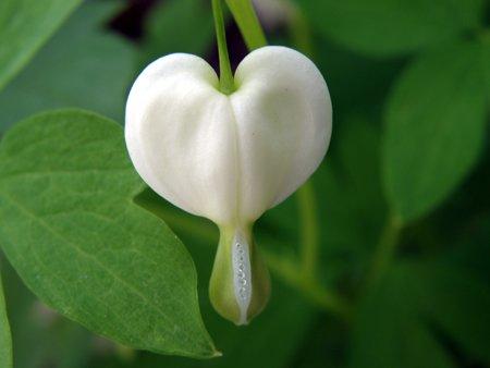 Healing Flowers