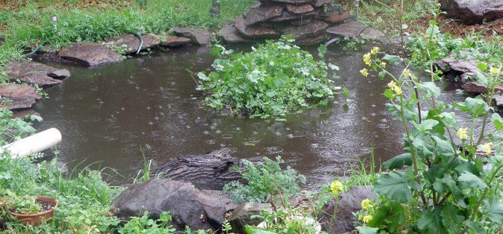 Amphibian Songs